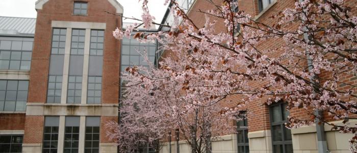 Floweing trees Waterbury Campus